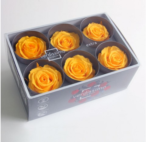 6 Roses Extra Warm Yellow